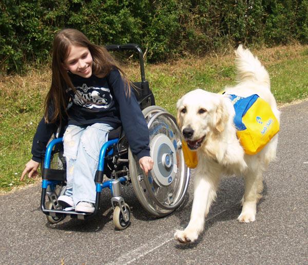 Chiens d'assistance - Handi'chiens